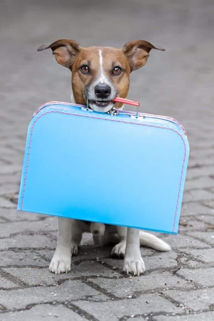 Dog holding suitcase