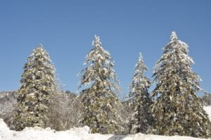 Trees_covered_with_snow_in_the_Smoky_Mountains