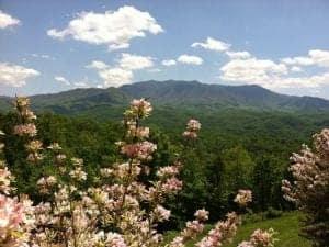 4 Things to Do When You Rent a Cabin in Gatlinburg TN