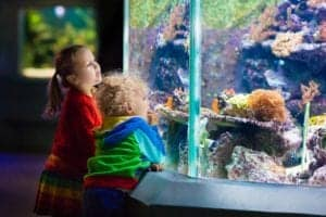 small children looking at tropical fish at Ripley's Aquarium of the Smokies